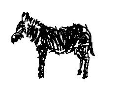 Zebra wie Esel