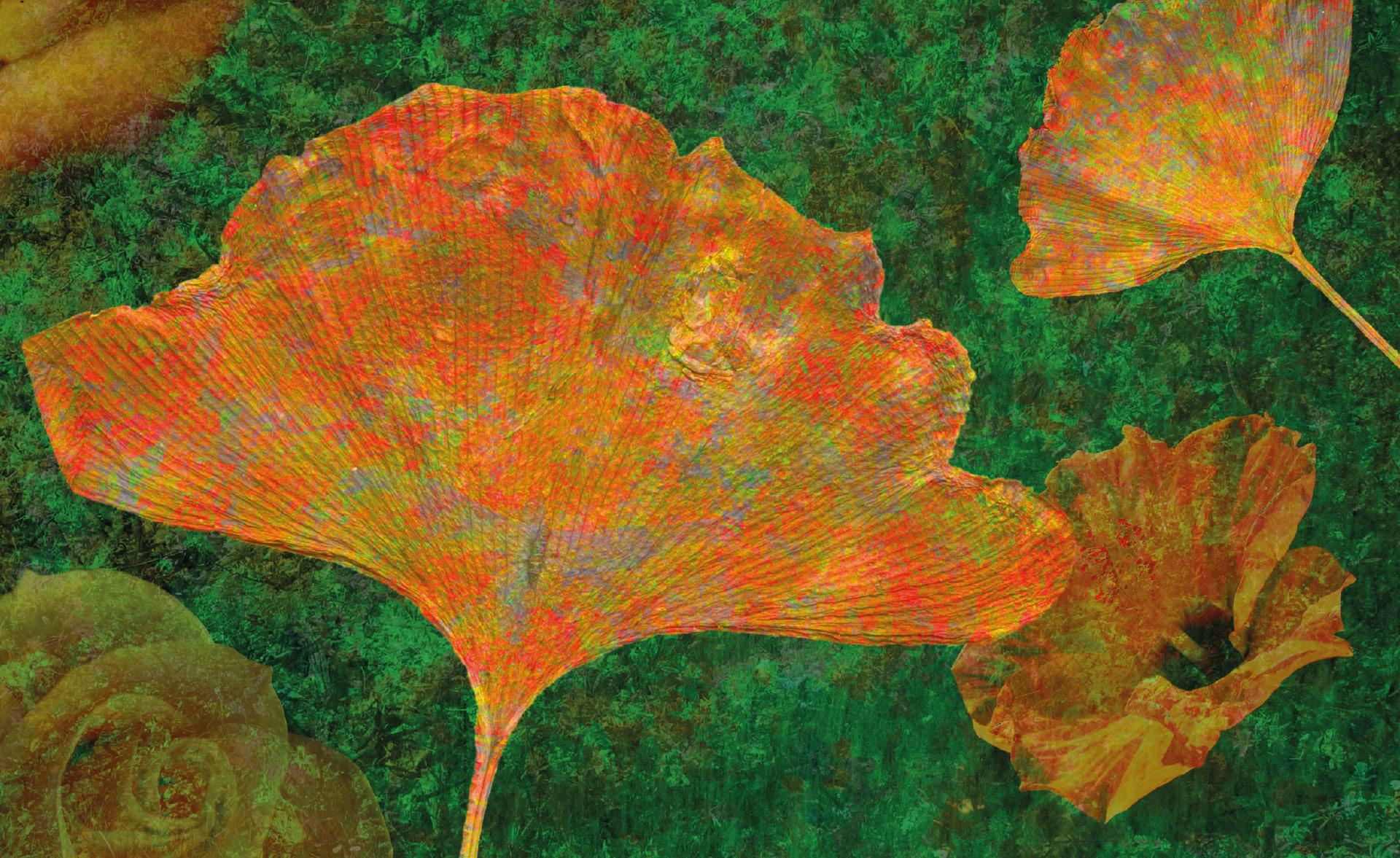 Idees Herbststaub  |  ID's autumn dust  |  Polvo de identificación de otoño